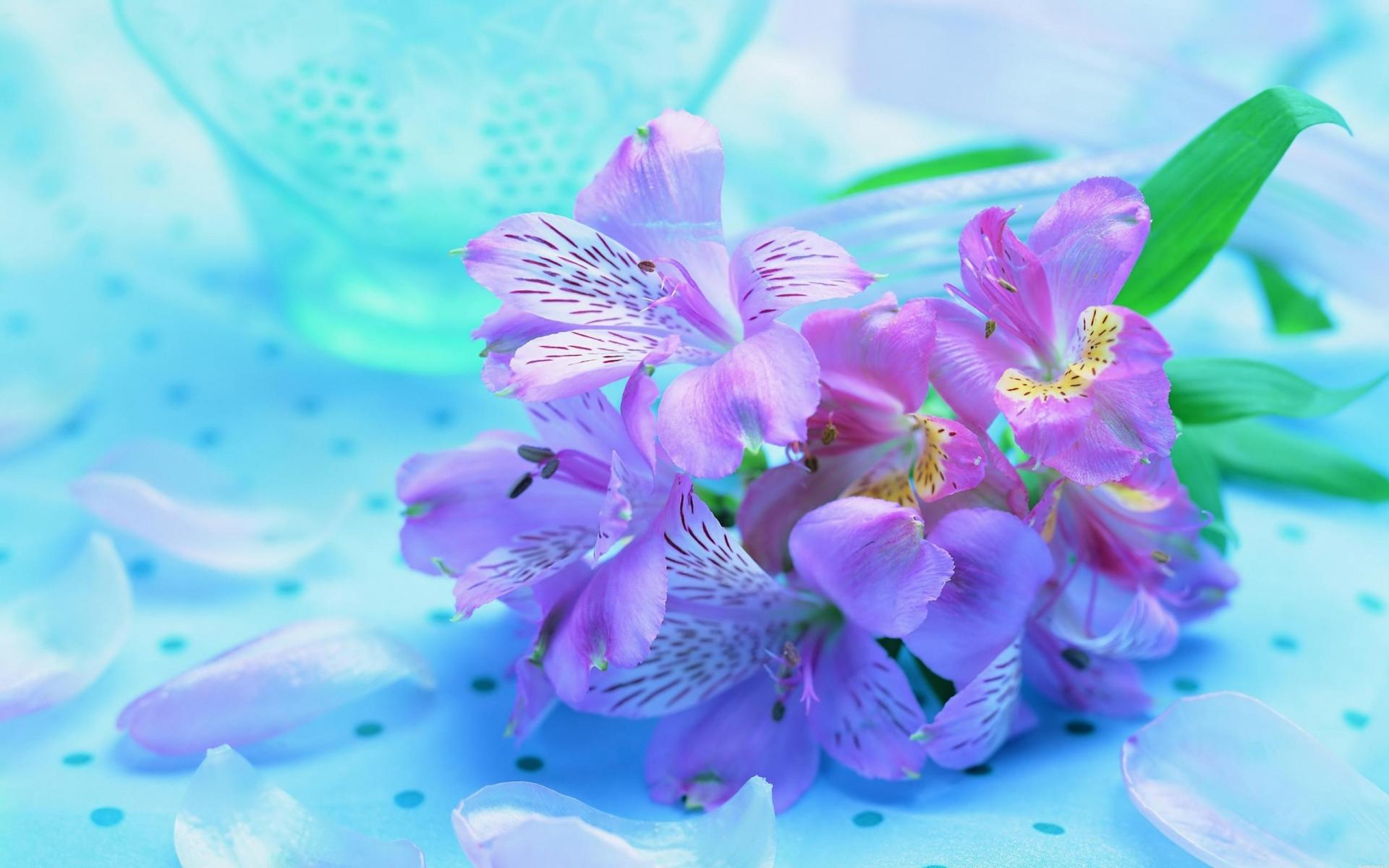 Букет ирисов яркие нежные цветы 1920x1200